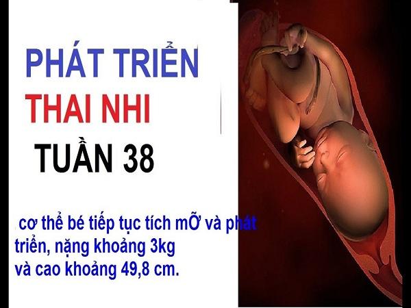 Thai nhi 38 tuần tuổi