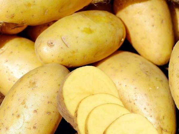 Cách làm tóc mọc nhanh cho nam bằng khoai tây