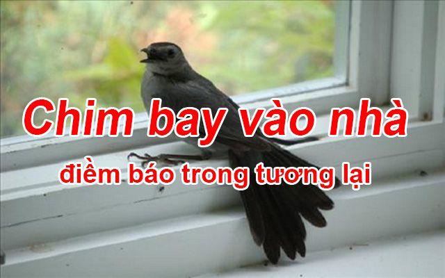 Chim bay vào nhà điềm báo gì đánh con gì